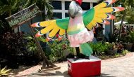 grand-turk-parrot-statue thumbnail photo