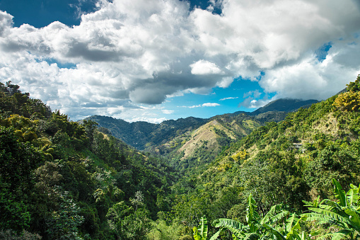 The exotic forests of Kingston are ripe with family adventure tours and the many fruits of Jamaica